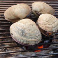 巨大アサリ ウチムラサキ貝の七輪焼き
